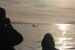 Whale watching with Orca Dreams