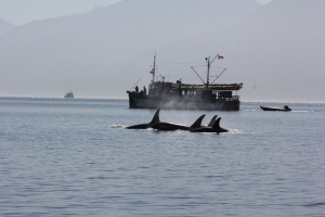 Orca Pod