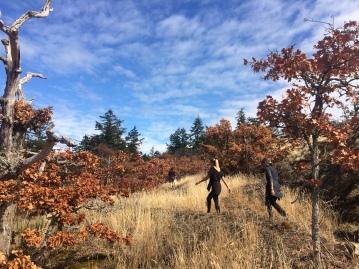 Hicking in Mt. Douglas