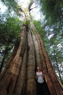 Cedars in Ucluelet