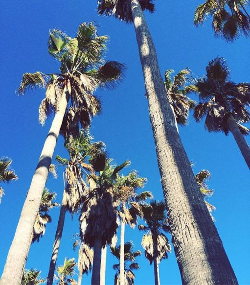 Back in the warm weather, palm trees and surf ☀️☀️☀️ #travelmindedpeople #travel #roadtrip #usa #america #palmtrees _#beachlife #beach #surf