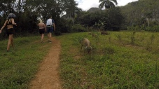 Hiking with Pigs