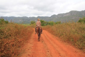 Cowboy in Vinales