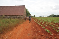 Tabacco farm